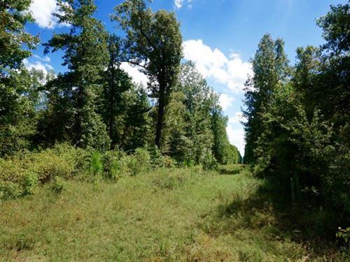 40 Acre Recreational/Timber Tract : Benton : Bossier Parish : Louisiana
