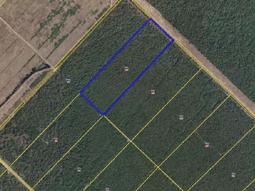 Great Hunting Tract In Hyde County : Belhaven : Hyde County : North Carolina