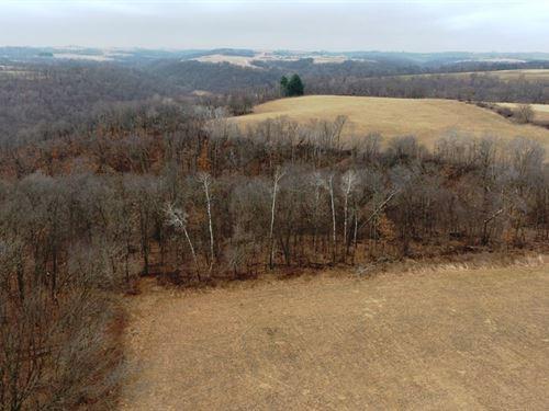 Steuben Hunting Land 60+/- Acres : Steuben : Crawford County : Wisconsin