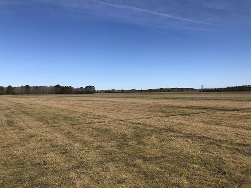 Farmland/Timber/Hunting Tract : Plymouth : Beaufort County : North Carolina