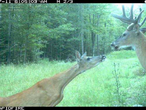 Outstanding Hunting Parcel : Crivitz : Marinette County : Wisconsin
