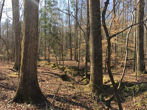 8.11 Acres in Pelzer, Greenville : Pelzer : Greenville County : South Carolina