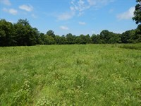 Pasture And Woods - Home Site : Sarah : Tate County : Mississippi