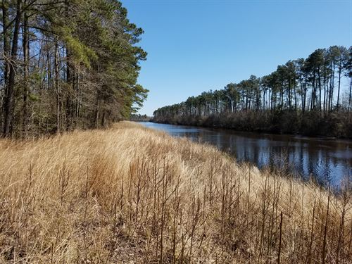 Great Area For Hunting And Fishing : Pantego : Hyde County : North Carolina