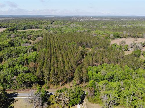 Istachatta 20 Acres In Brooksville : Brooksville : Hernando County : Florida