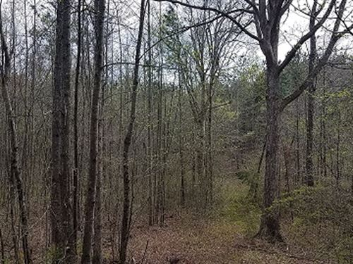 Mayfield Tract - 78+/- Acres : Heflin : Randolph County : Alabama