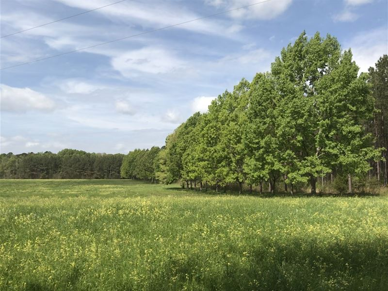 246+/- Acres Lowndes County : White Hall : Lowndes County : Alabama