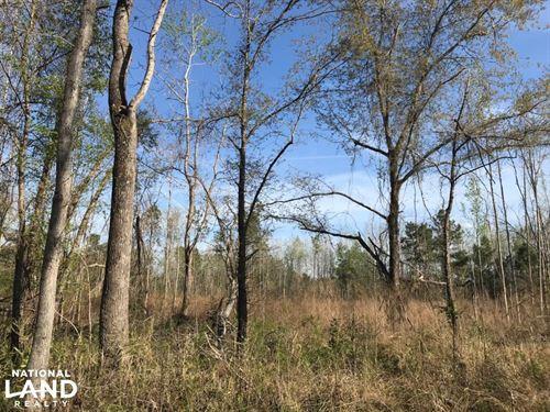 Lane Hunting Tract : Lane : Williamsburg County : South Carolina