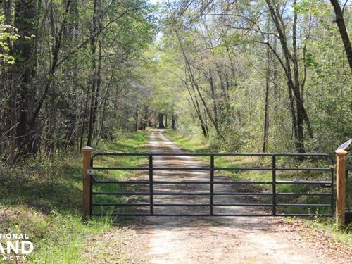 40 Acre Farm National Forest : Shulerville : Berkeley County : South Carolina