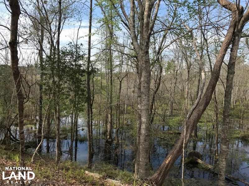 Black Mingo Creek : Hemingway : Williamsburg County : South Carolina