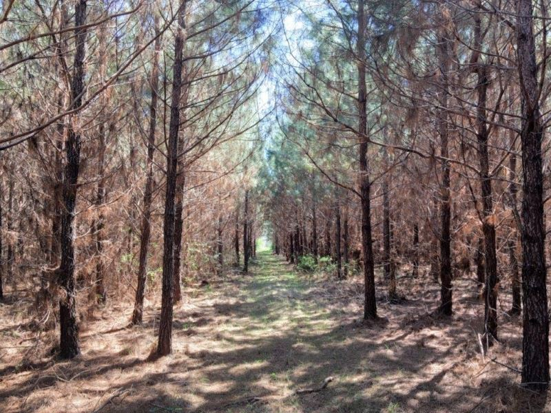 34 Acres In Copiah County : Georgetown : Copiah County : Mississippi