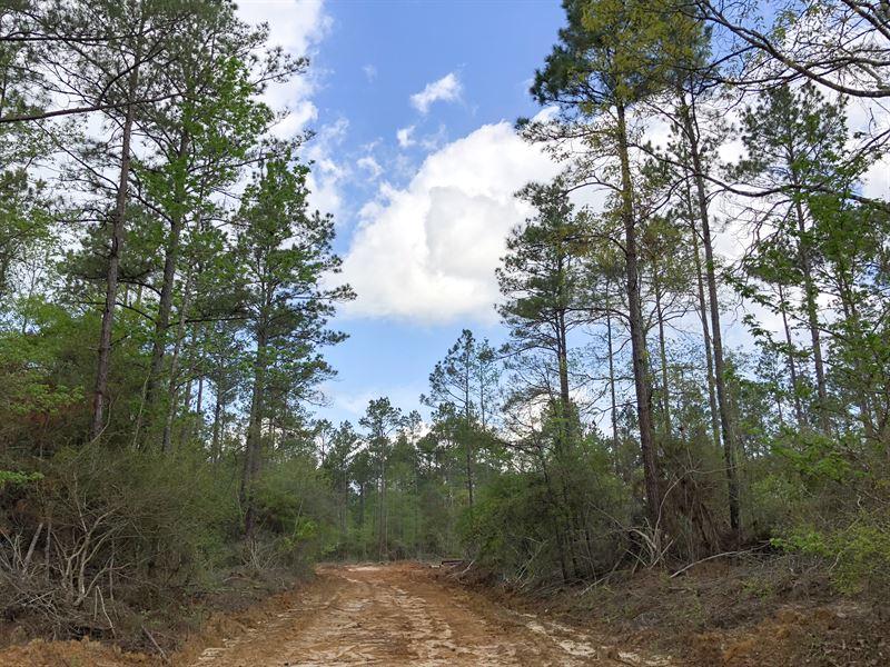 24 Acres Lilly Island Loop : Camden : Polk County : Texas