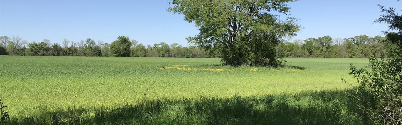 Black Belt Al Farm, Timber, Ponds : Marion : Perry County : Alabama