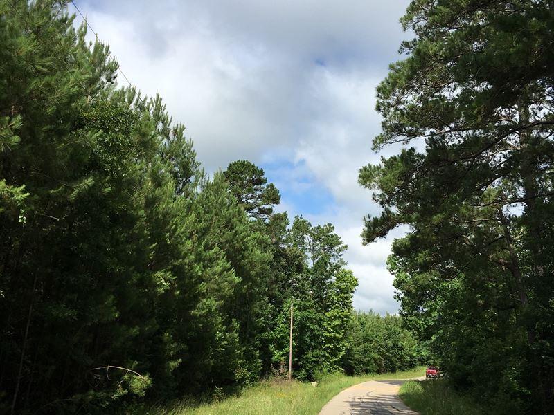 22 Acres Wheatfield Branch : Oakhurst : San Jacinto County : Texas
