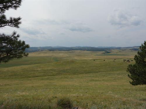 Timber Ridge Ranch : Hermosa : Custer County : South Dakota