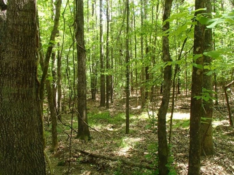 108 Acres In Oktibbeha County In St : Sturgis : Oktibbeha County : Mississippi