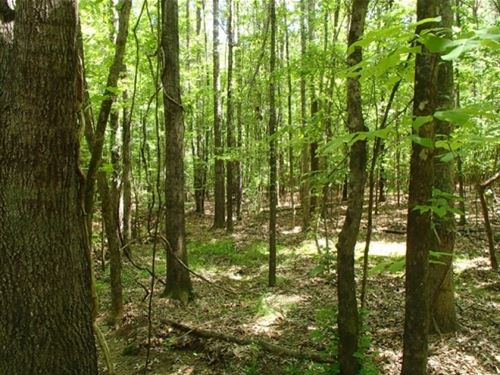108 Acres In Oktibbeha County : Sturgis : Oktibbeha County : Mississippi