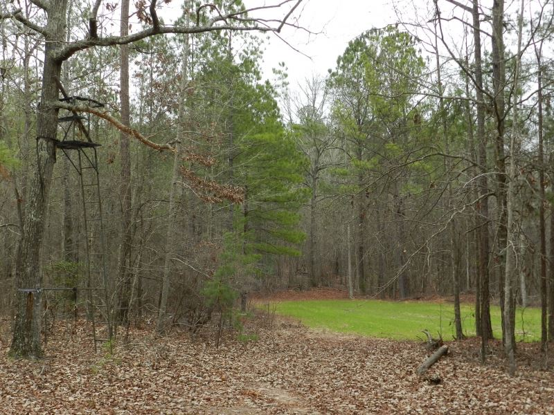 Convenient Hunting & Homesite : Milledgeville : Baldwin County : Georgia