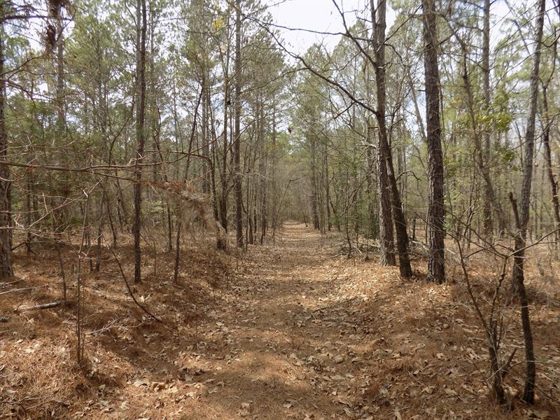 Chesterfield County Sc Acreage : Chesterfield : Chesterfield County : South Carolina