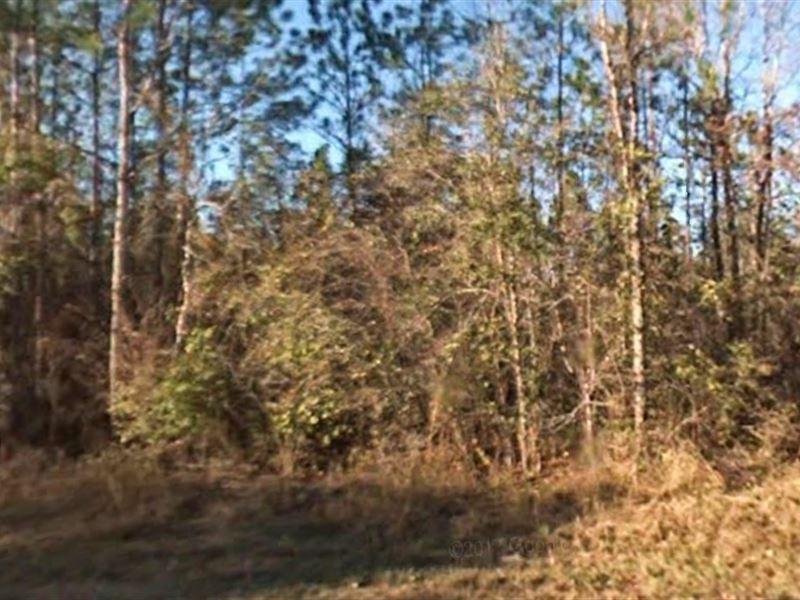 Wakulla County, Fl $110,000 Neg : Crawfordville : Wakulla County : Florida