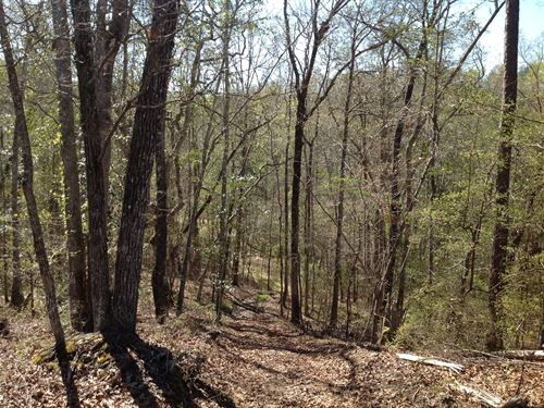 Hunting Tract With Shooting Range : Marion : Perry County : Alabama