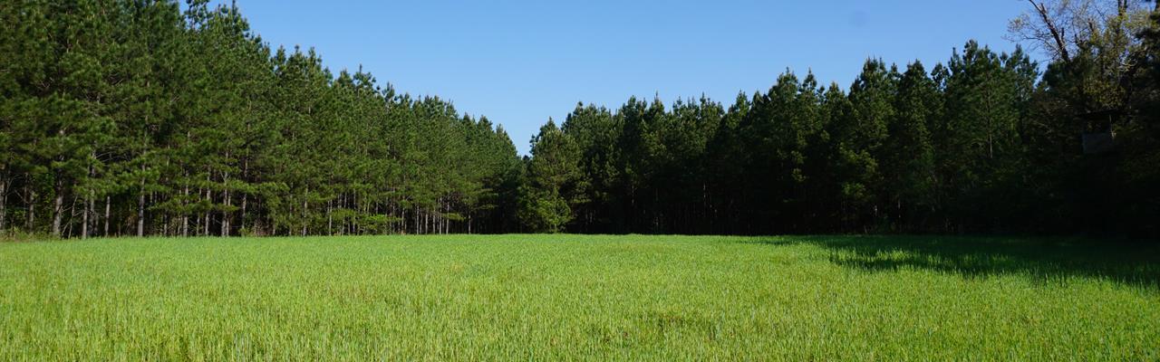 Potato Creek Timberlands : Gray : Jones County : Georgia