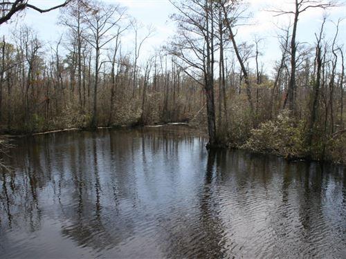 Gibbs Family Land : Columbia : Tyrrell County : North Carolina
