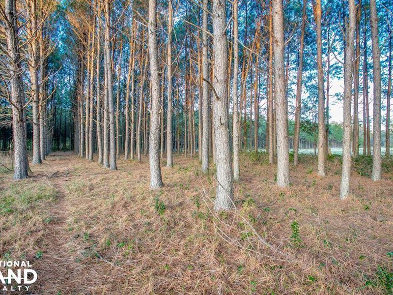 Hodges Lane Hunting And Fishing Tra : Moundville : Tuscaloosa County : Alabama