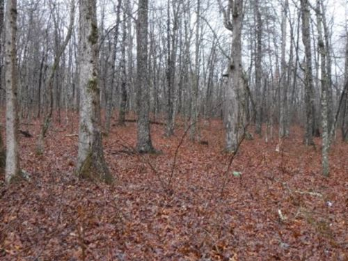 64.36 Ac Totally Wooded : Spencer : Van Buren County : Tennessee