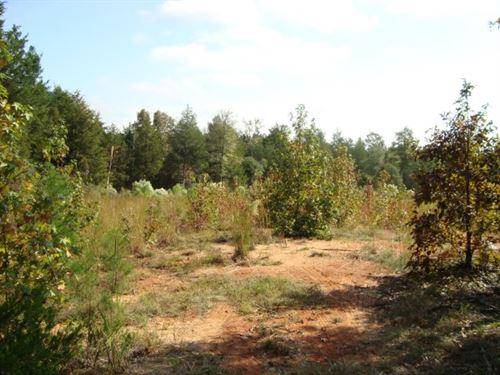 31 Acres - Chester County, Sc : Richburg : Chester County : South Carolina