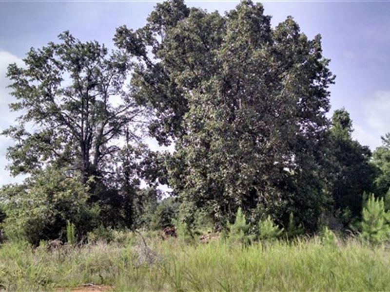 53.59 Acres - Fairfield County, Sc : Winnsboro : Fairfield County : South Carolina