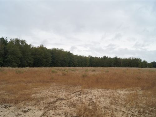38.1 Acres - Kershaw County, Sc : Bethune : Kershaw County : South Carolina