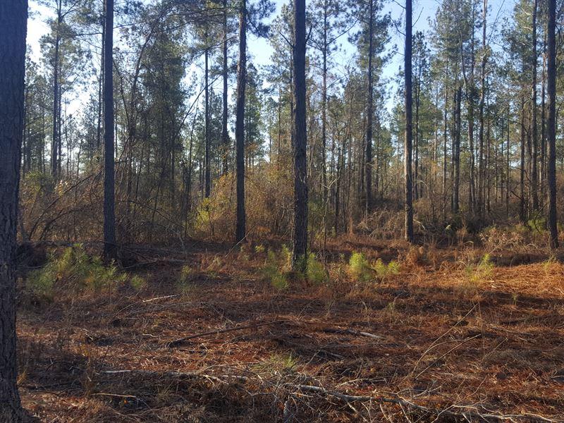 Timber Tract W/ Pond : Swainsboro : Emanuel County : Georgia