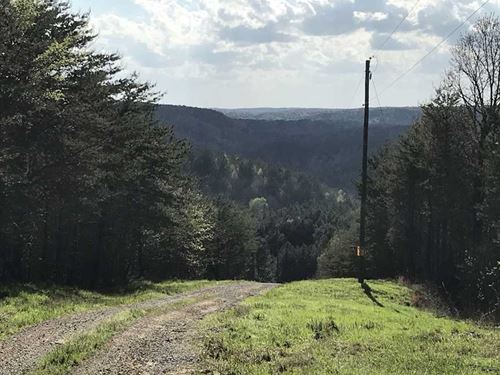 120 Acres Off Poplar Springs Rd. : Brookwood : Tuscaloosa County : Alabama