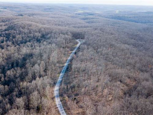 40 Acre 2 Parcels Timber Ground : Bruner : Christian County : Missouri