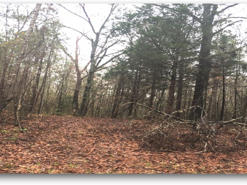 80 Acres In Winston County : Noxapater : Winston County : Mississippi