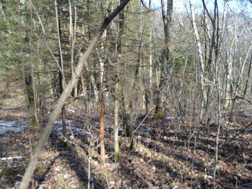 Wood Acreage On A Dead End Road : Mindoro : La Crosse County : Wisconsin