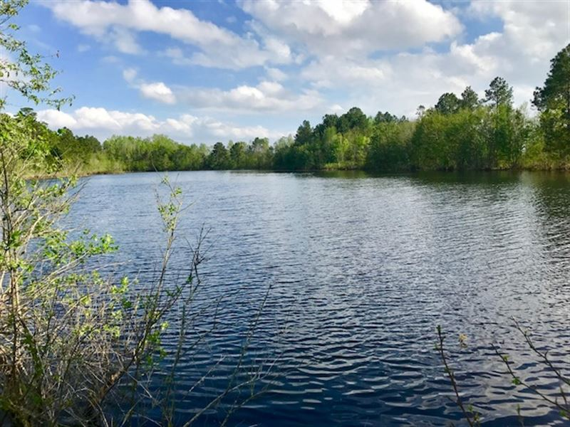 5 Acre Pond, Mature Pine Timber : Pelham : Mitchell County : Georgia
