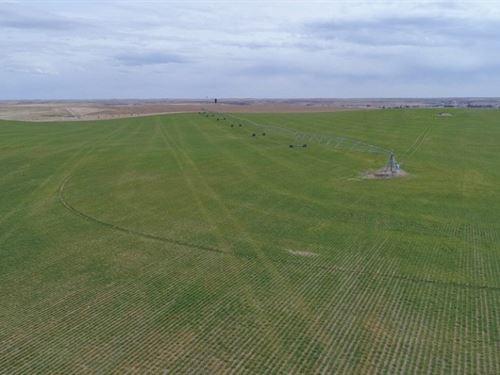 Potter Pivots, Range, And Home : Potter : Cheyenne County : Nebraska