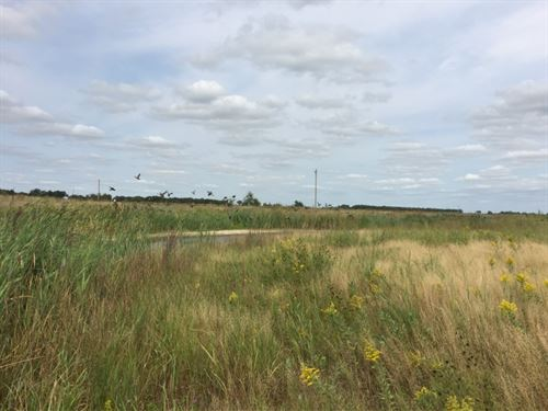 Merrick County Waterfowl And Upland : Central City : Merrick County : Nebraska