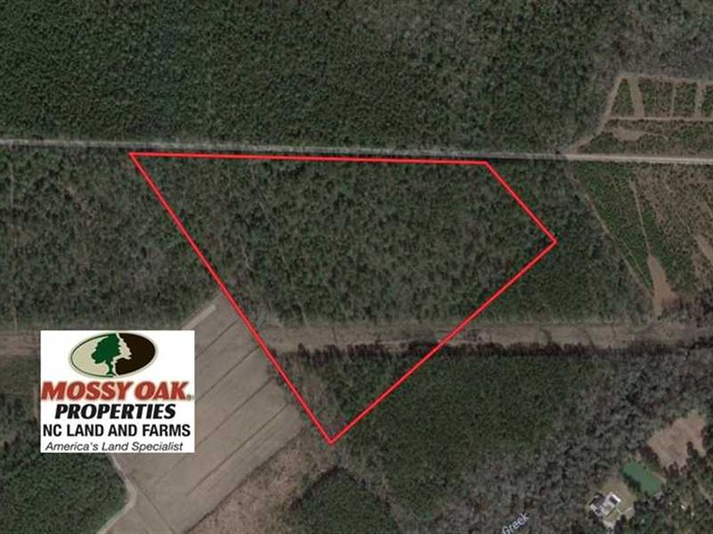 Under Contract, 34 Acres of Timbe : Grantsboro : Pamlico County : North Carolina