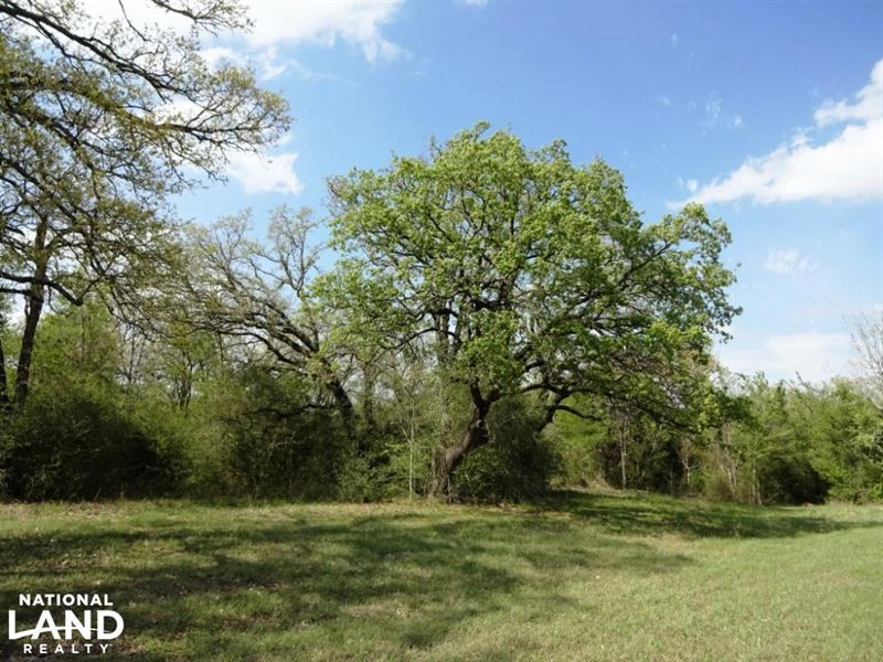 Large Oak Trees, Beautiful Hay Mead : North Zulch : Madison County : Texas