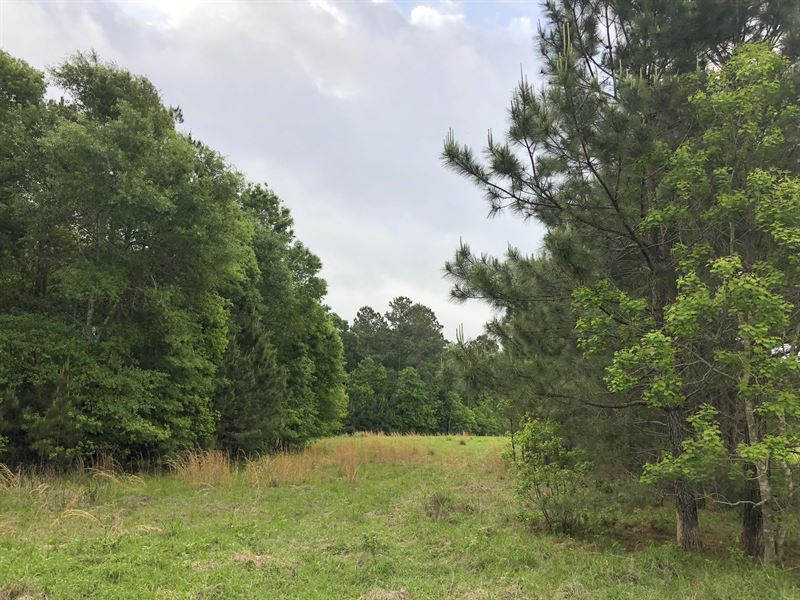 246 Acres Timberline Road : Dayton : Liberty County : Texas