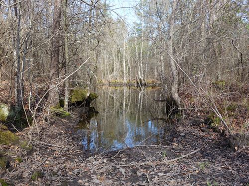 14.02 Acres - Lee County, Sc : Bishopville : Lee County : South Carolina