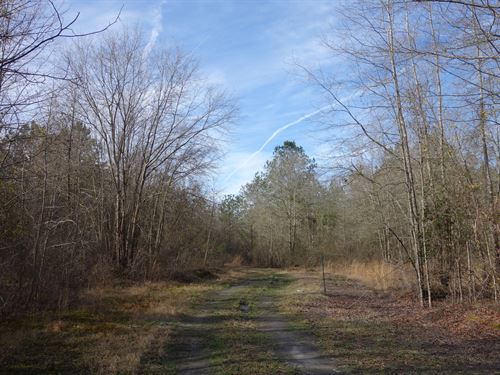 13.71 Acres - Lee County, Sc : Bishopville : Lee County : South Carolina