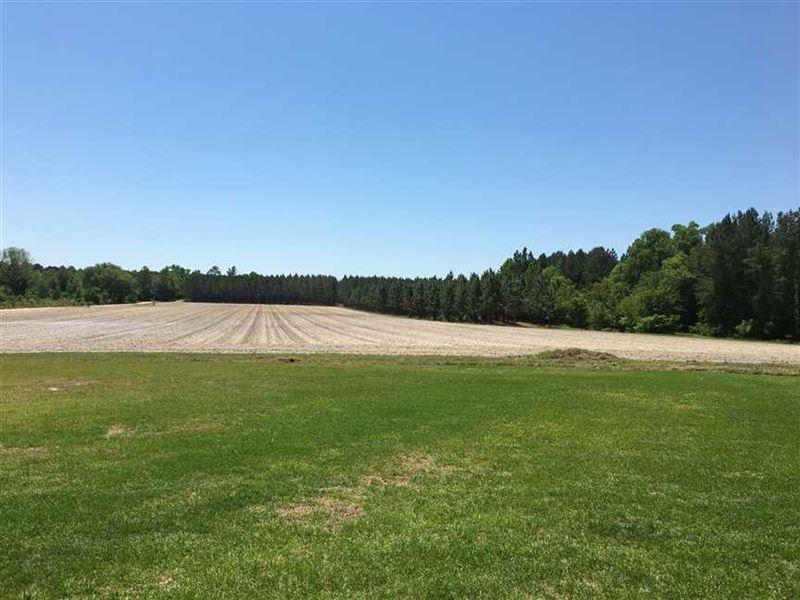 Timber, ag Land, Creek, Ponds, And : Hazlehurst : Jeff Davis County : Georgia