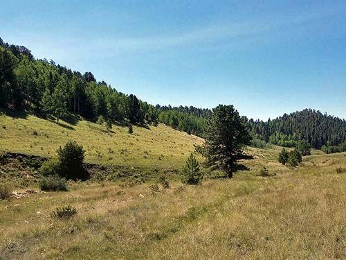 Creek On 39 Acres : Cripple Creek : Teller County : Colorado