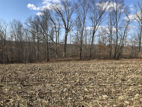 Patton Mills Rd - 13 Acres : Stockport : Washington County : Ohio