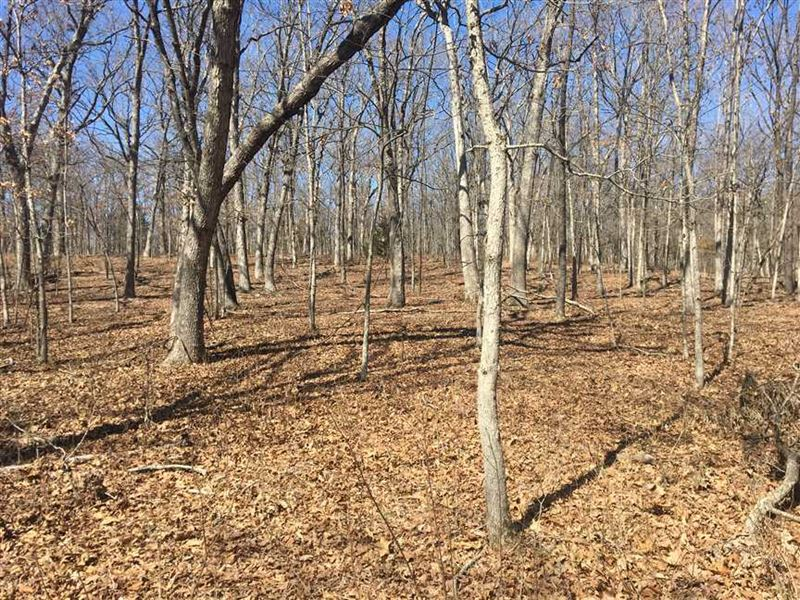 120 Acres Of Mature Timber & Hu : Cole Camp : Benton County : Missouri
