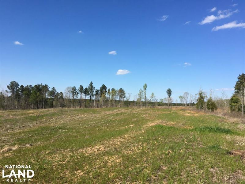 Open Land, Woods, And Creeks : Waterloo : Laurens County : South Carolina